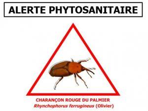 Capture alerte phyto