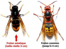 difference-frelon-01