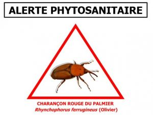 Capture alerte phyto